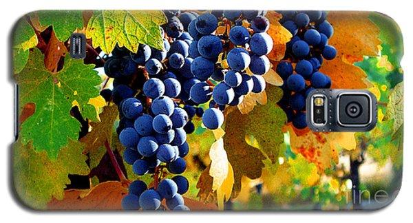 Vineyard 2 Galaxy S5 Case by Xueling Zou
