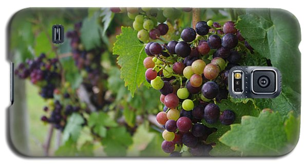 Galaxy S5 Case featuring the photograph Vineyard Colors by Greg Graham