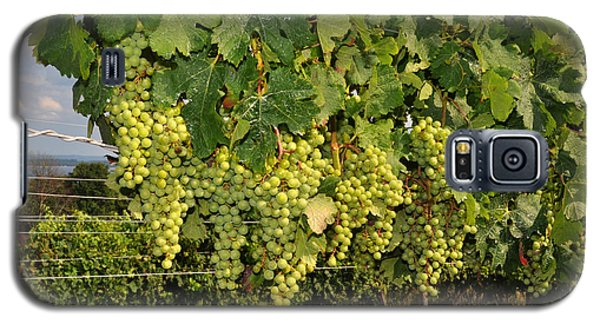 Galaxy S5 Case featuring the photograph Green Grapes In Traverse City Michigan by Diane Lent