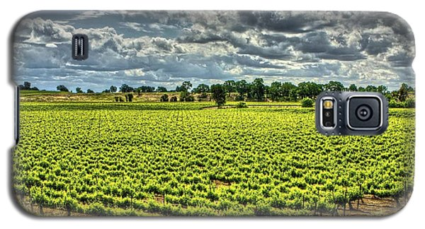 Vineyards Almost Ripe Galaxy S5 Case