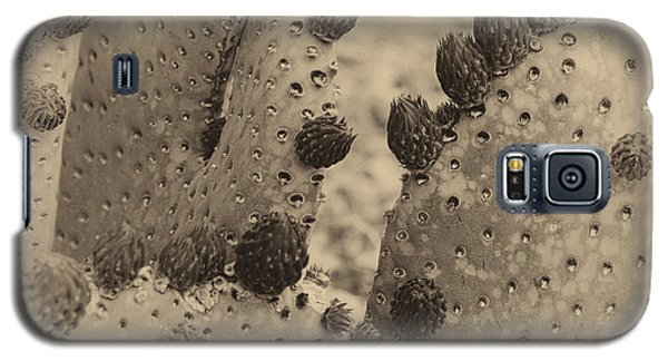 Galaxy S5 Case featuring the photograph Vintage Cactus by Glenn DiPaola