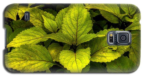 Vintage Green Coleus Plant Galaxy S5 Case