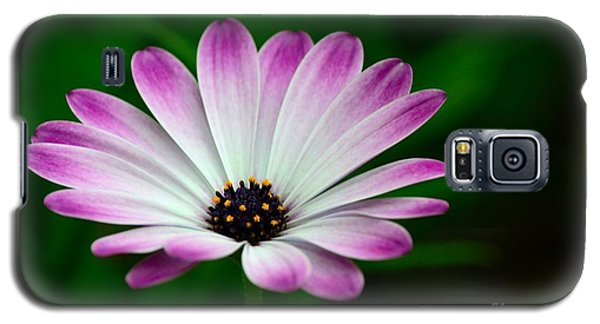 Violet And White Flower Petals With Yellow Stamens Blossoms  Galaxy S5 Case