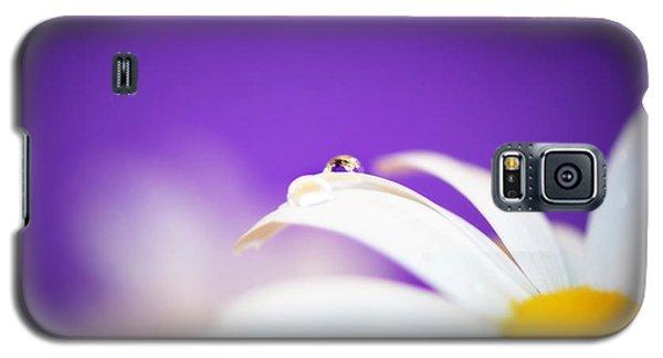 Violet Daisy Dreams Galaxy S5 Case