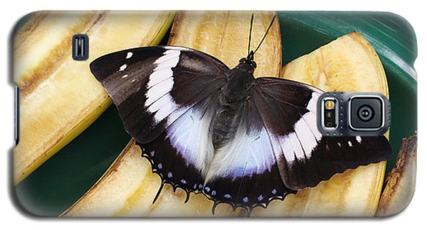 Violet-spotted Charaxes Butterfly Galaxy S5 Case