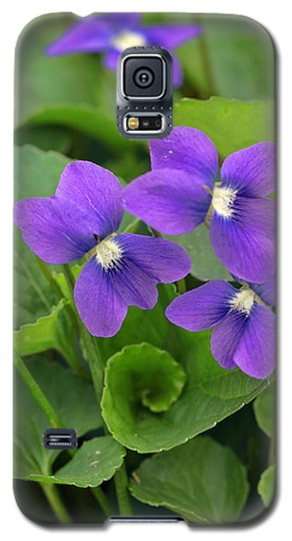 Violet Trio Galaxy S5 Case