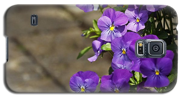 Galaxy S5 Case featuring the photograph Violets by Denise Pohl