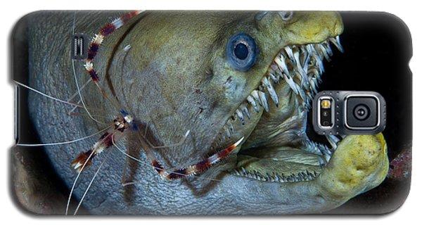 Viper Galaxy S5 Case - Viper Moray And Boxer Shrimp by C?dric P?neau