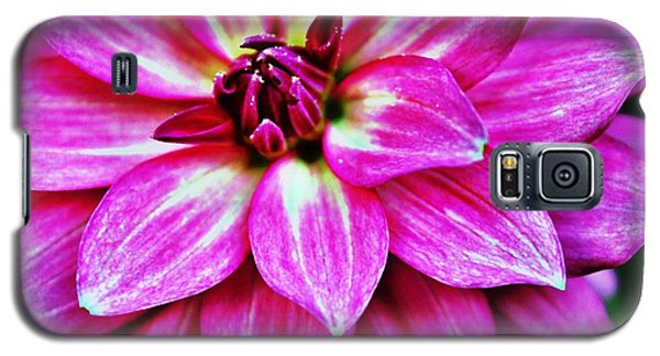 Virbrant Pink Dahlia Galaxy S5 Case