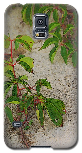 Virginia Creeper At The Beach Galaxy S5 Case