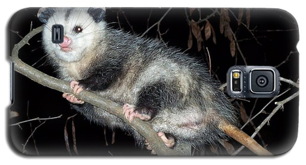 Galaxy S5 Case featuring the photograph Virginia Opossum by William Tanneberger