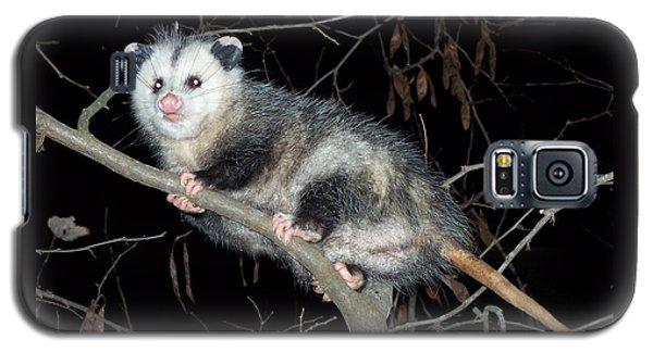 Virginia Opossum Galaxy S5 Case