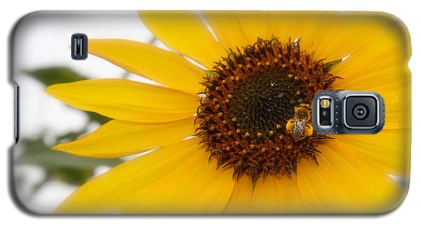 Galaxy S5 Case featuring the photograph Vivid Sunflower With Bee Fine Art Nature Photography  by Jerry Cowart