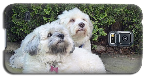 Galaxy S5 Case featuring the photograph Havanese Dog Sisters by Laurie Tsemak