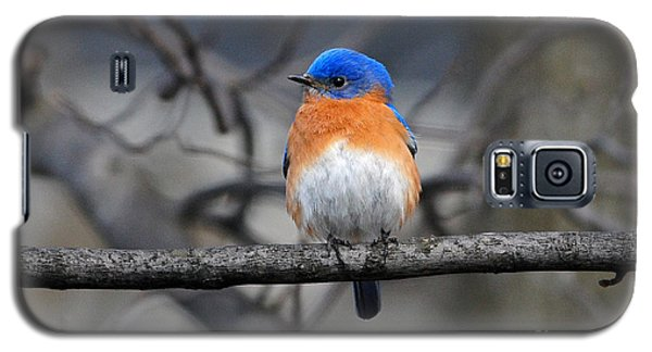 Galaxy S5 Case featuring the photograph Waiting For Spring by Olivia Hardwicke