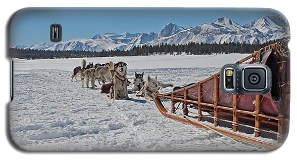 Galaxy S5 Case featuring the photograph Waiting Sled Dogs  by Duncan Selby