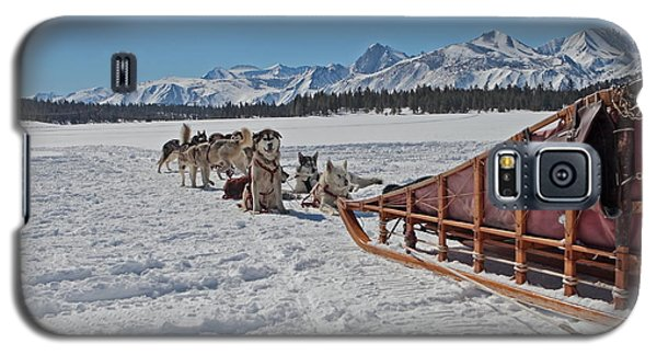 Waiting Sled Dogs  Galaxy S5 Case