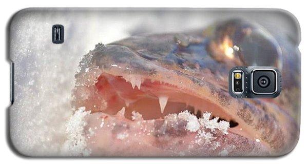Walleye Teeth Galaxy S5 Case