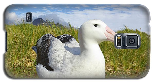 Wandering Albatross Incubating  Galaxy S5 Case