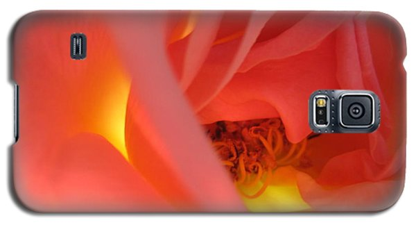 Warm Glow Pink Rose 2 Galaxy S5 Case