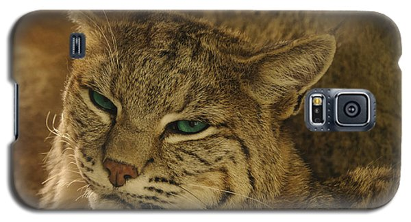 Wary Bobcat Galaxy S5 Case