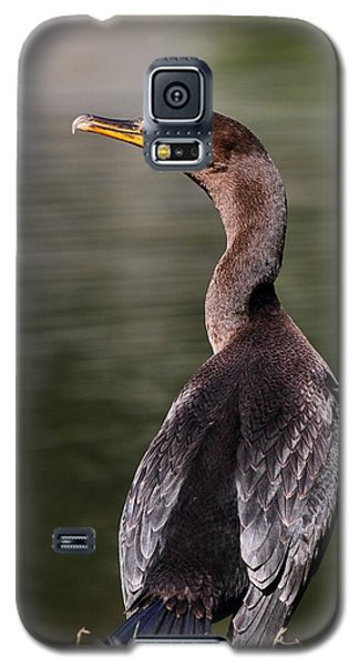 Wary Cormorant Galaxy S5 Case by Mike Farslow
