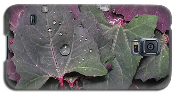 Galaxy S5 Case featuring the photograph Washing Purple Orach by Patricia Overmoyer
