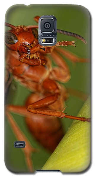Wasp 3 Galaxy S5 Case