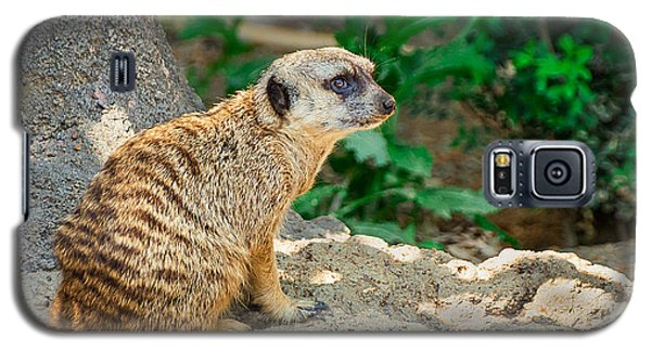 Meerkat Galaxy S5 Case - Watchful Meerkat by Jon Woodhams