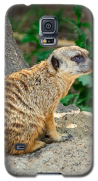 Meerkat Galaxy S5 Case - Watchful Meerkat Vertical by Jon Woodhams