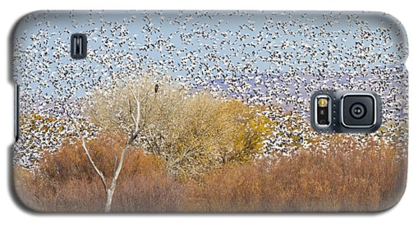 Galaxy S5 Case featuring the photograph Watching Over The Flock by Bryan Keil