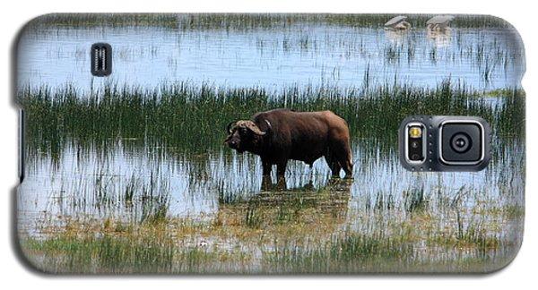 Water Buffalo At Lake Nakuru Galaxy S5 Case