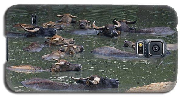 Water Buffalo Galaxy S5 Case