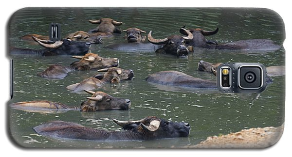 Water Buffalo Galaxy S5 Case