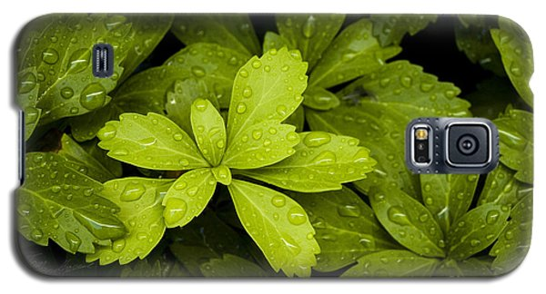 Water Drops New Growth Galaxy S5 Case