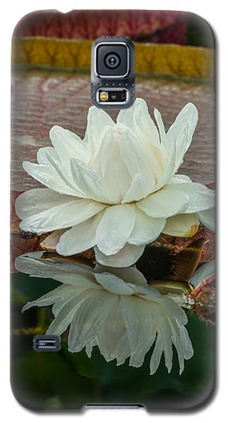 Lily Pond Galaxy S5 Case by Phil Abrams