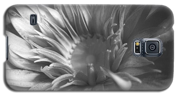 Water Lily B N W Galaxy S5 Case by Angela Murray