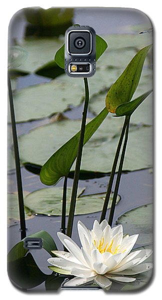 Water Lily In Bloom Galaxy S5 Case