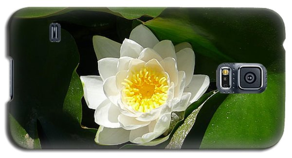 Galaxy S5 Case featuring the photograph Water Lily by Nora Boghossian