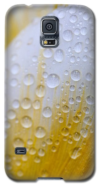 Waterdrops On Tulip Galaxy S5 Case by Robert Camp