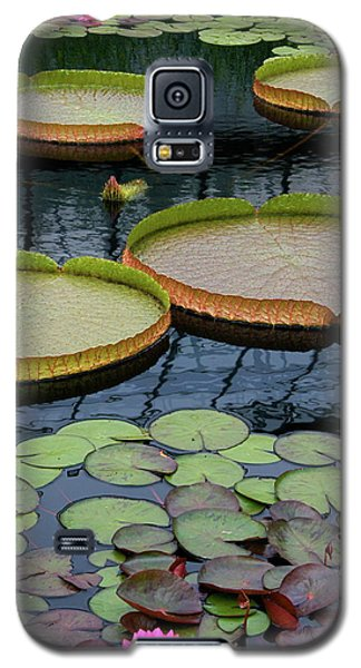 Waterlilies And Platters 2 Galaxy S5 Case by Byron Varvarigos