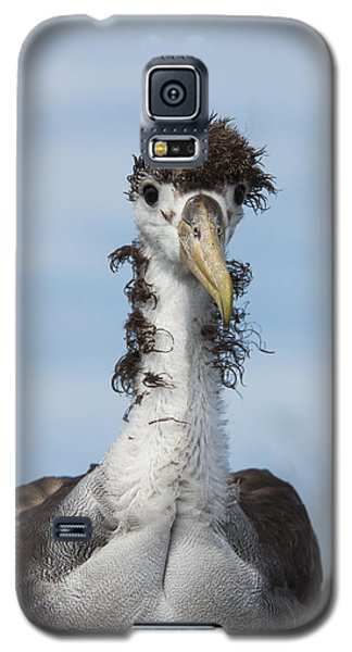 Waved Albatross Molting Juvenile Galaxy S5 Case