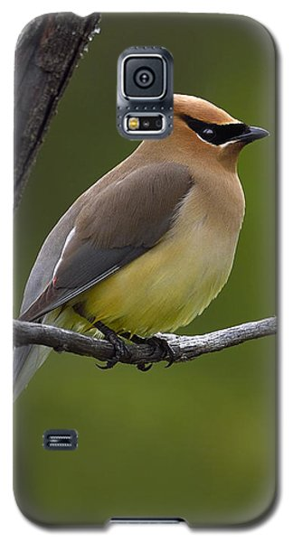 Wax On Galaxy S5 Case