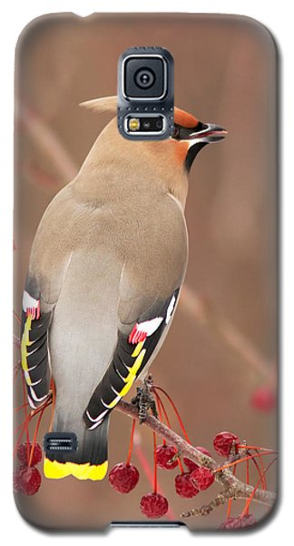 Waxwing In Winter Galaxy S5 Case by Mircea Costina Photography