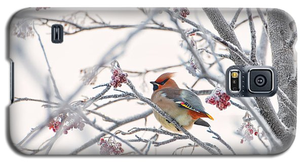 Cold Galaxy S5 Case - Waxwing by Konstantin Selezenev