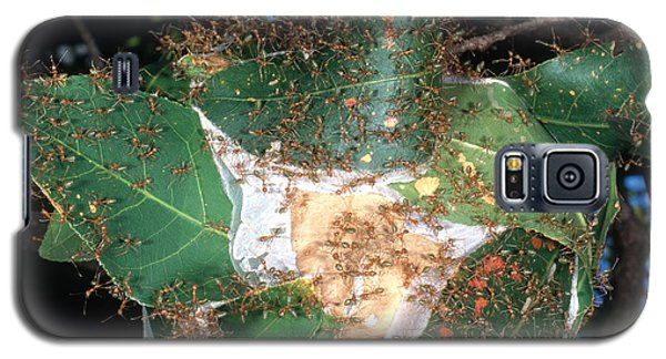 Weaver Ants Galaxy S5 Case by Gregory G. Dimijian, M.D.