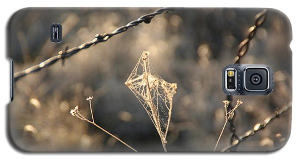 Galaxy S5 Case featuring the photograph web by David S Reynolds