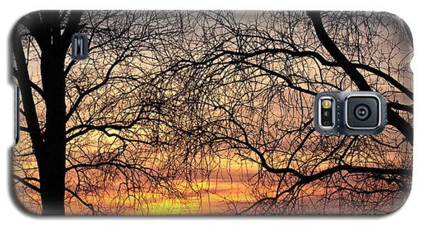 Web Of Branches Galaxy S5 Case by David Warrington