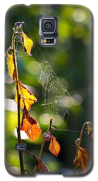 Galaxy S5 Case featuring the photograph Web Support by Adria Trail