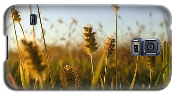 Galaxy S5 Case featuring the photograph Weeds by Joseph Skompski